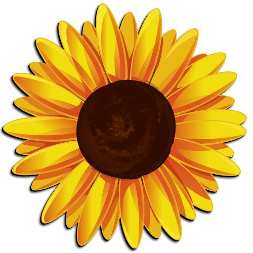 What Dream About Sunflower Means
